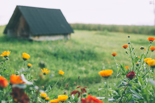 Wildflowers and a cottage