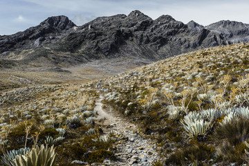 view of Trekking path - Venezuela