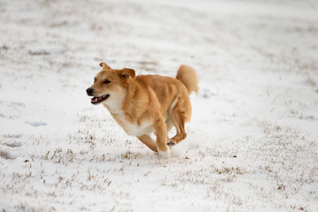 Winter dogs at play