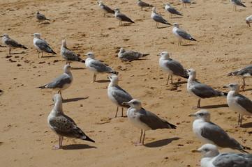 Des oiseaux sur la plage - Algarve - Portugal