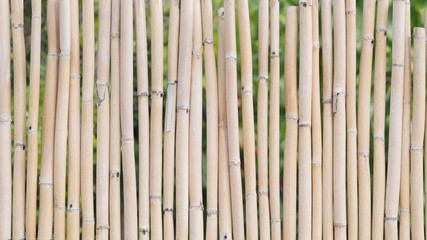 Background of a bamboo fence