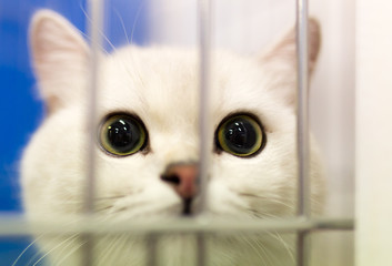 Portrait of a cat in a cage
