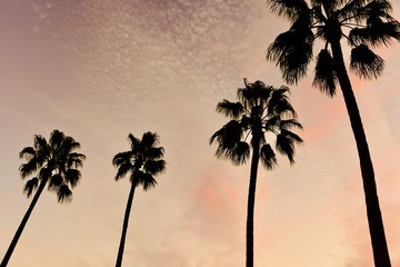 Silhouette of Palm Trees Against Orange Sunset Sky