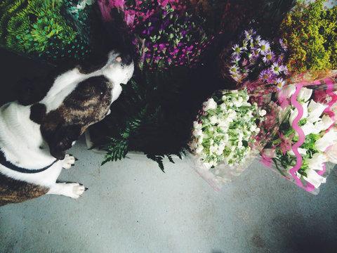 Dog Floral Assistant