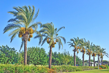 palm trees in the landscape design of public space