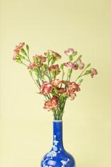 Carnation in blue vase