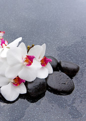 White orchid and black spa stones.