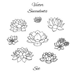 Hand drawn vector succulents contours set isolated on white background.