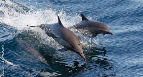 Dolphins playing