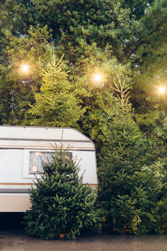 Christmas Trees for Sale with Trailer