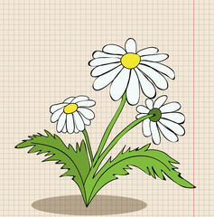 flower camomile cartoon
