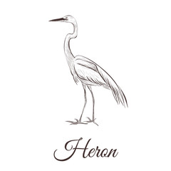 Heron is a sketch drawing. Bird series hand drawing heron vector illustration.