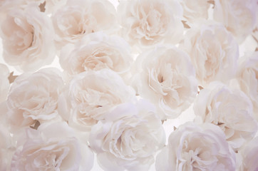 pale pink white roses background