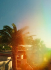 summer palm tree landscape with sunlight in blur