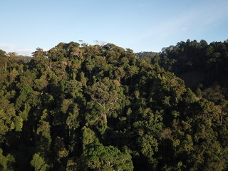 Forest rainforest jungle. Aerial photo of trees canopy