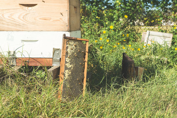 A Beeswax Tray Leaning Against A Beehive