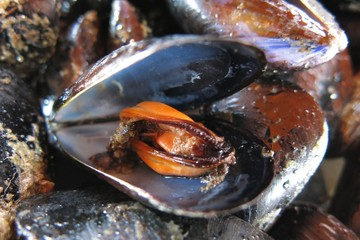close-up open mussel shell