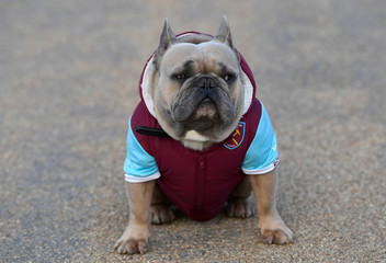 Premier League - West Ham United vs Brighton & Hove Albion