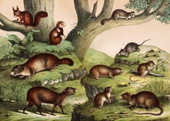 Wild animals in nature.