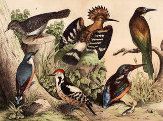 Different species of birds in the wild