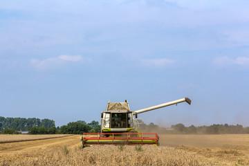 Mähdrescher fährt Ernte ein auf einem Getreidefeld, Freiraum oben