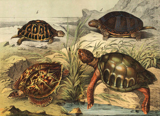 Species of turtles in the wild.