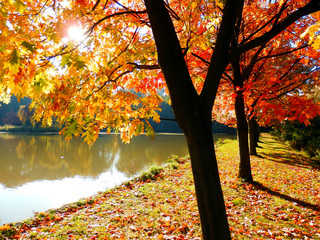 color autumnal photography of oaks alley and lake