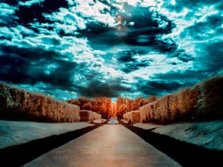 Garden in infrared