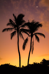 Two Palms Sunrise from Secret beach on the tropical island of Maui, Hawaii. Silhouette of two palm trees, a colorful sky and the moon