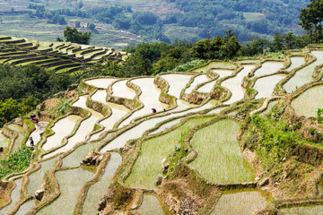 Papiers peints Les champs de riz Yuanyang Rice Terraces, Yunnan - China. Terraced rice fields of Hani ethnic people in Yunnan province, China.
