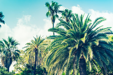 Tropical background of palm trees against blue sky