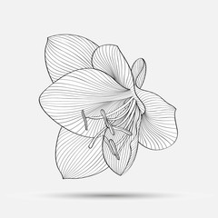 Hand-drawing abstract floral background. Vector flower amaryllis. Element for design.