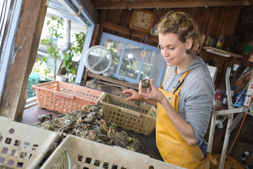 woman inspecting harvested oyster