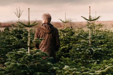 Man surrounded by pine Christmas Trees