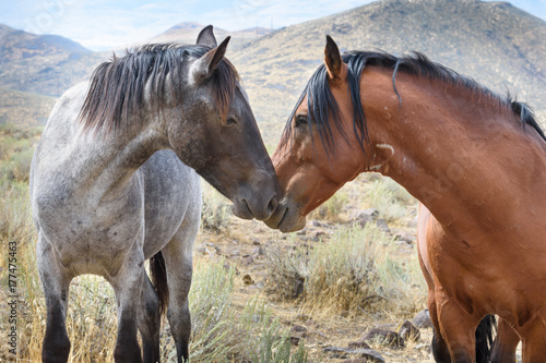 Affectionate Mustangs
