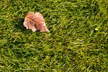 leaves on grass at autumn