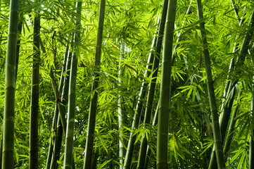 Fotobehang Bamboo Asian bamboo tree