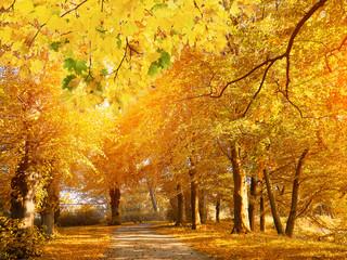 Aluminium Prints Autumn Sunset in autumn park. Autumn colors.