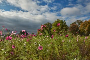 Wildflowers in Stevenage Park