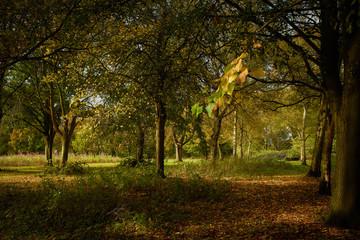 Autumn Sunshine Hertfordshire
