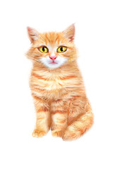 Cute furry orange cat isolated on white background.