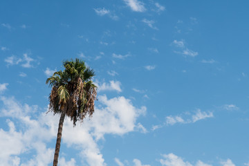 tropical palm with sky at background