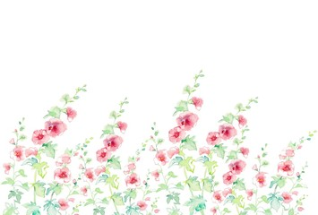 立葵、風景