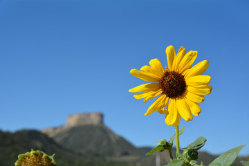 Sunflower and mountain