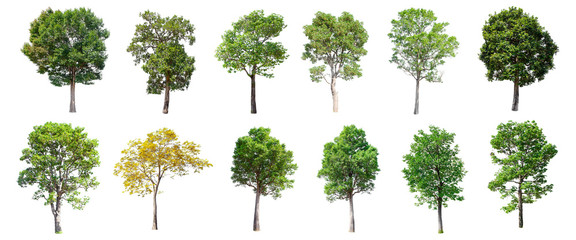 Set of isolated trees on white background. Wall mural