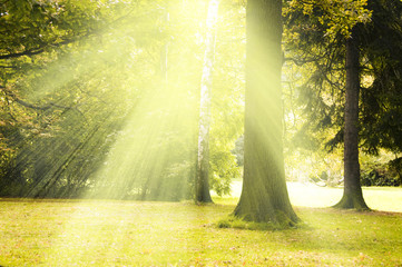 Wall Mural - tree with rays of sun light creating a magic atmosphere