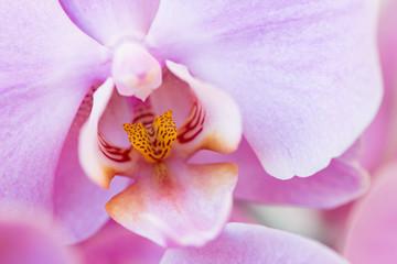 Fototapeta Details phalaenopsis plant