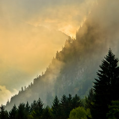 Wall Mural - Sunrise over Mountain valley with pines