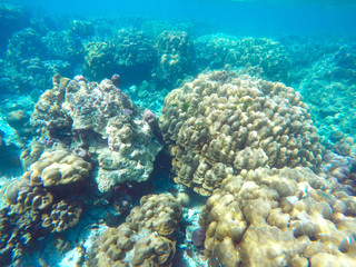 The abundant of shallow coral reefs in the Southern of Thailand, where is home to many small colorful fishes and marine animals.
