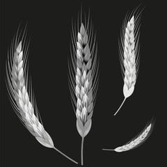Picture of wheat ears
